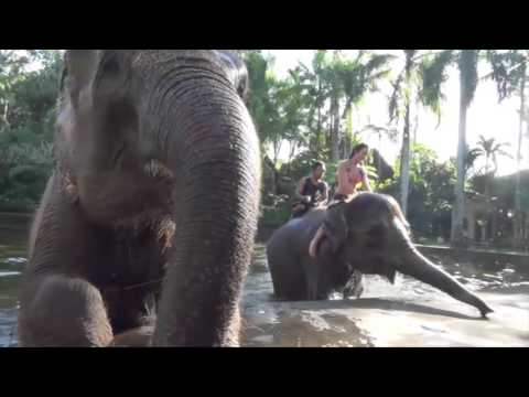 Bathing Elephants at Elephant Safari Park Taro, Ubud Bali