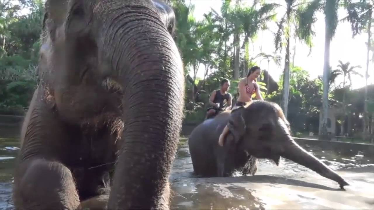 Watch Elephants Online Free