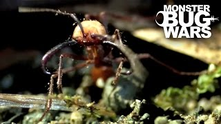 Epic Ant Battles #1 | MONSTER BUG WARS