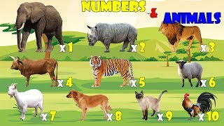Learn Numbers And Animals | Bé Học Đếm Số Qua Các Con Vật | CC Channel for Kids