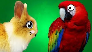 КРОЛИК БАФФИ и ПОПУГАИ на А ну-ка Давай-ка / ГОВОРЯЩИЕ ПОПУГАИ /прикольные попугаи / PETS видео