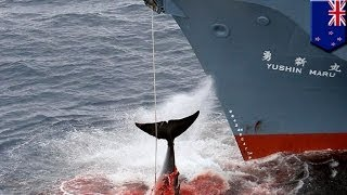 New Zealand protests at Japanese whaling ship entering its maritime zone