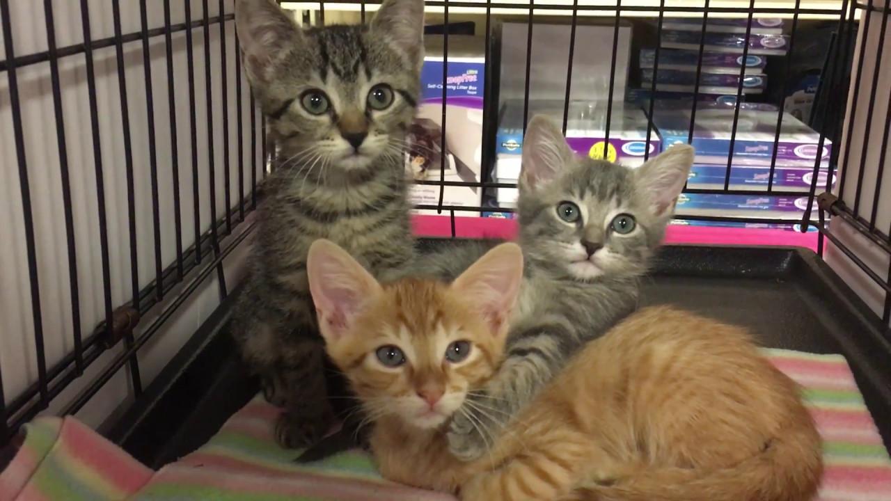 Sassafras and Willow at Petsmart Adoptions