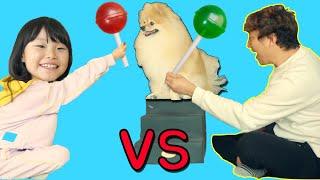 뽀뽀는 누구를 더 좋아할까요? 라임 VS 라임파파 | 반려동물 강아지 애정도 테스트 | 간식먹방 LimeTube