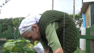 Anneannemle Bostana Gittik / Bir Sürü Salatalık / Gülşah Vlog Çekti / Bahçede Olanlar