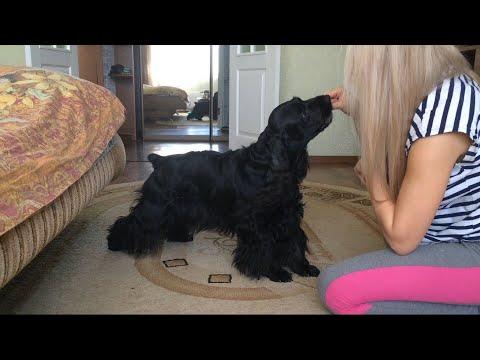 Собака и команды! Черная Дженни