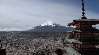 日本富士山、櫻花物語 【4K影片】