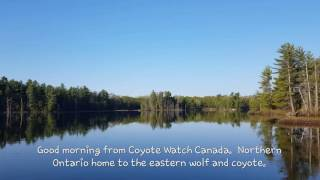 Beautiful homeland to the eastern wolf and coyote.