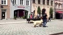 "Hundeschule München - Demonstration im ""Doppelpack"""