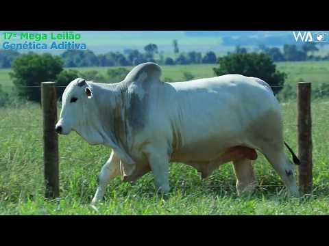 LOTE 123 - REMC A2112 - 17º Mega Leilão Genética Aditiva 2020
