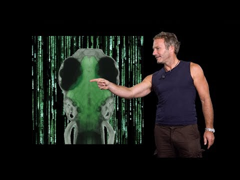 Florian Engert (Harvard) 2: Gain control: neuronal activity & behavior in virtual environments