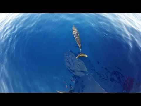 Dolphins Tiran Straits,Egypt 3rd Oct 2016