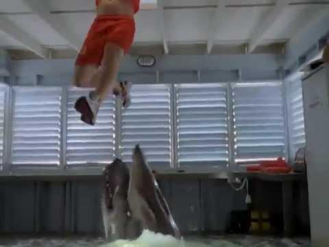 Tiburones en Malibú (Malibu Shark Attack) (David Lister, Australia, Canada, 2009)