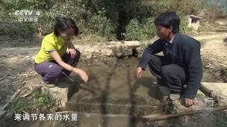 [远方的家]世界遗产在中国 大地雕塑 壮美梯田| CCTV中文国际
