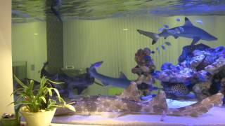 2年前から海水魚を飼ってます。 ブラックチップシャーク70センチと50セ...
