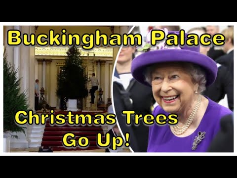 Queen's Christmas Trees Have Arrived At Buckingham Palace 2018!