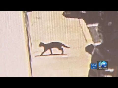 Rabid cat aggressively chases, bites person in Chesapeake