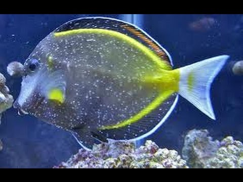 how to treat fish with ick in a saltwater aquarium part 1