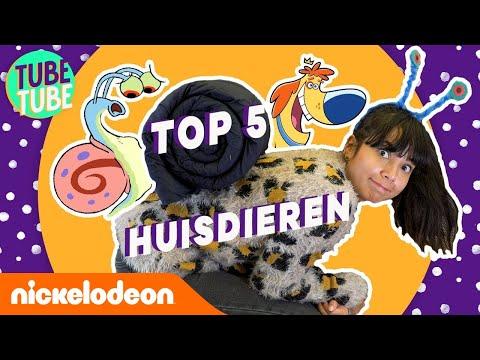 De coolste huisdieren van Nickelodeon 🧡  | TubeTube | Nickelodeon Nederlands