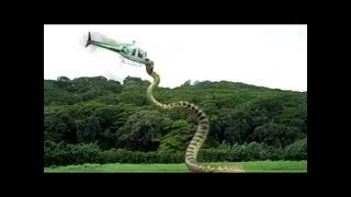 Download Video Most dangerous snake of the world Attacks Aeroplane MP3 3GP MP4