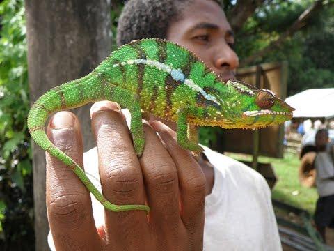 Diégo-Suarez et sa région, Madagascar nord 2015, Bifaco