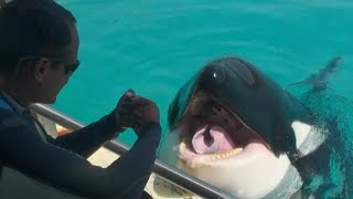 """Killer whale Wikie """"talks"""" to researchers"""