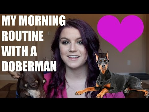 MY MORNING ROUTINE WITH MY DOBERMAN