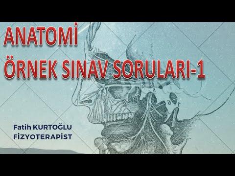 Anatomi Öğreten Örnek Sınav Soruları-1 | Önlisans-Lisans