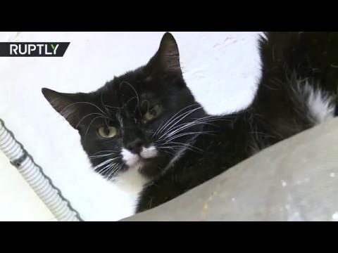 Вопрос: Сколько примерно котов и кошек одновременно в Эрмитаже в Петербурге?