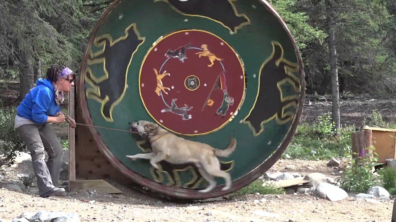 Jeff Kings Husky Homestead Denali Alaska YouTube - Husky homestead