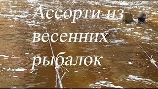 Ассорти из весенних рыбалок