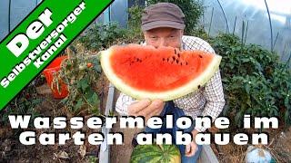 Wassermelone im Garten richtig anbauen