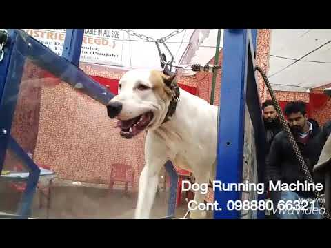 MANUAL DOG TREADMILL-PACE DOG TREADMILL & EQUIPMENTS- CALL- +91-9888066321