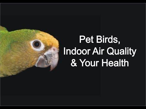 Pet Birds, IAQ & Your Health