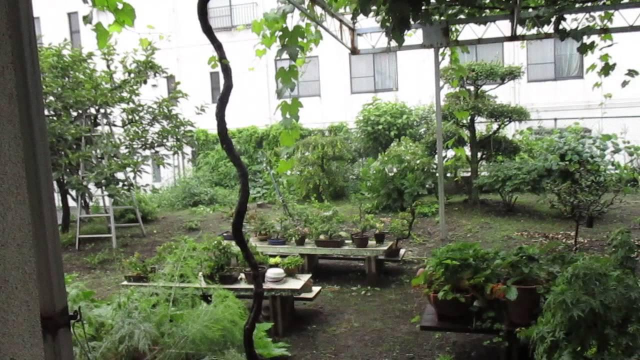 雨に洗われた庭の緑 - YouTube