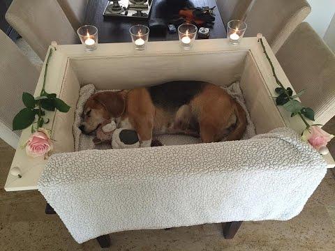 Does Bravecto Kill Dogs?  New Data 11/23/16