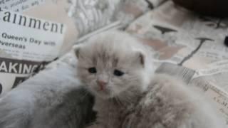 Дневник котят #2 | День 11