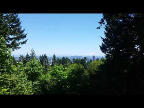 View of Mt. Hood from Forest Park in Portland, Oregon
