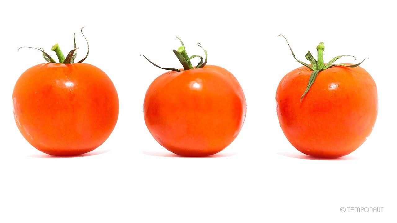 rotting tomatoes youtube