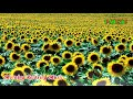 Morning Music Relaxing - Light Background Instrumental Music