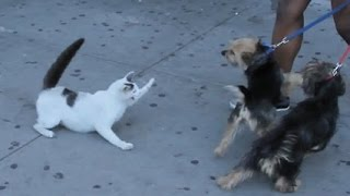 Crazy cats attacking dogs AGAIN #2 / CATS FUNNIEST ATTACK COMPILATION 2017