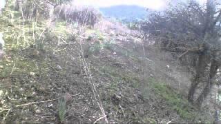 caccia grossa olzai agasti 2013/14