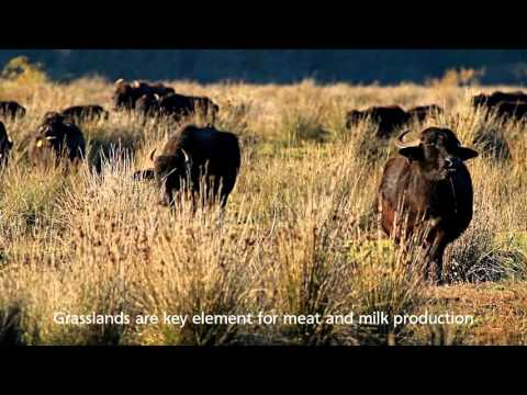 The Importance of Protected Areas