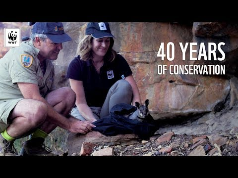40 Years of Conservation | WWF-Australia