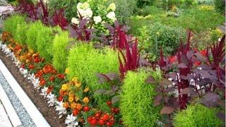 видео Выбор цветов для клумбы на даче. Дизайн и оформление цветочной клумбы