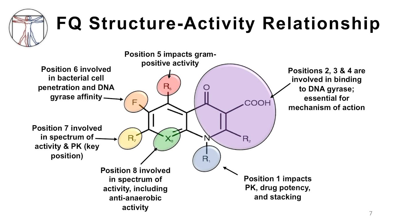 ketamine structure activity relationship for quinolones