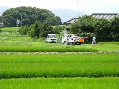 Radio-controlled crop dusting in Fukuoka, Japan