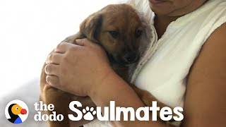 couple-finds-a-stray-puppy-on-vacation-the-dodo-soulmates