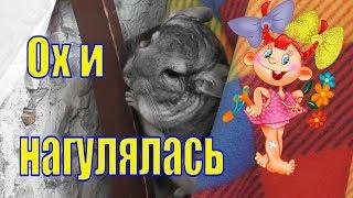 Шиншилла Шуша/ Смешная/ озорная/ забавная