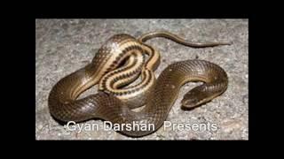 सापों देखने से शगुन और अपशगुन | Snake Ko Dekhne Ke Shagun Or Apshagun thumbnail